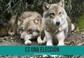 17 la leyenda de los dos lobos