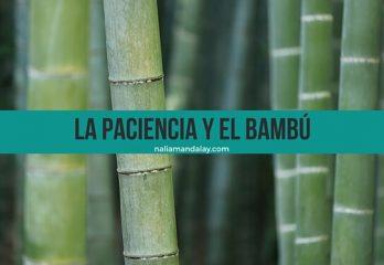 8 cuento el bambú japonés