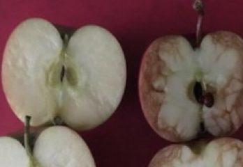 83-manzanas-rosie