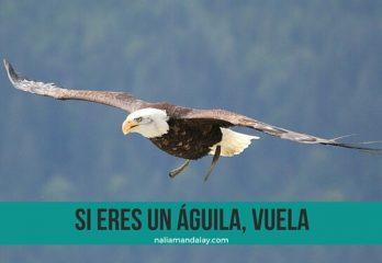 84 cuento el águila