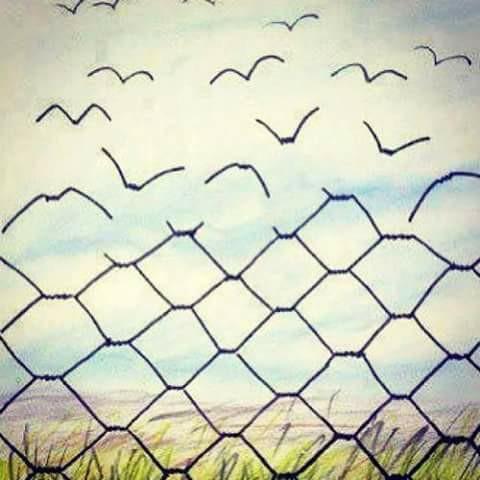 alambrada pájaros